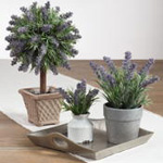 HA339 potted lavender bunch